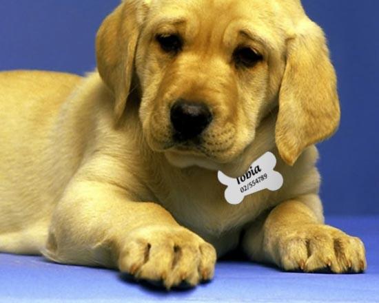 medaglietta per cani personalizzata
